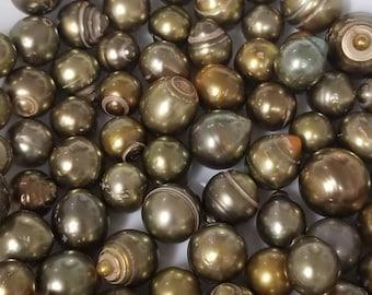 Longan Tahitian pearls, Tahiti Pearls, 8-15mm sizes
