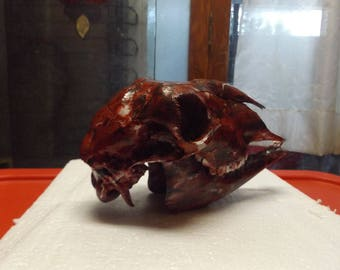Painted sheep skull Tri colored # 25