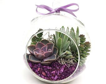 "Succulent Terrarium DIY Kit ""Pretty in Purple"" -XLarge Globe Terrarium-7 inch or 8 inch-Gardener Gift-Housewarming Gift-Plant Kit-DIY Gift"