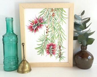 Bottlebrush botanical print A5, A4 or 10x8; Australian native flora vertical art print; Callistemon watercolour plant print Australian gift