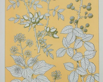 Owen Jones - The Grammar of Ornament - Stunning 1800s Lithograph - Leaves from Nature (P96)