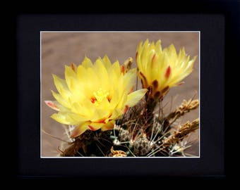Flower Art Print Nature Photography - Rustic Framed Art Print - Desert Decor Flower Photography - Gift for Her Home Decor Wall Art Canvas
