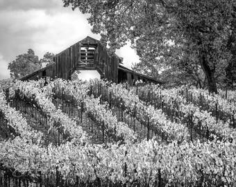 Black and White Print, Fall Harvest Art, California Vineyard Photography, Large Sonoma Canvas,  Old Barn Wall Decor, Limited Edition Print