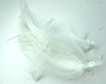 20 DUVETS COLLAR 10/12 CM WHITE ROOSTER FEATHERS