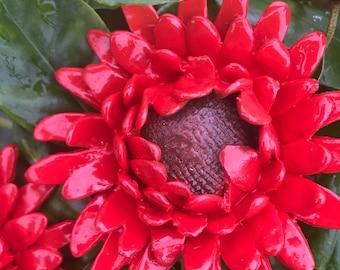 2 ceramic  flowers