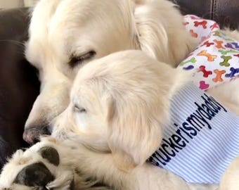 Hashtag Bandana Seersucker with any # Classic Tie Bandana || Preppy Dog Scarf  || Puppy Gift by Three Spoiled Dogs