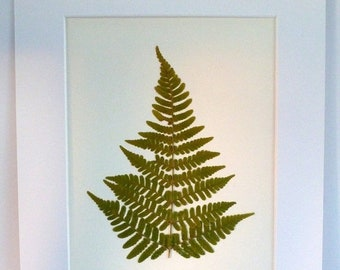 SALE Real Pressed Fern Botanical Herbarium Specimen Art of Autumn Fern 8x10