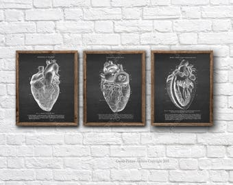 Doctor Gift Heart Anatomy Wall art set of 3 Unframed Anatomy prints, medical student graduation gift, Cardiologist Gift, Doctor Office Decor