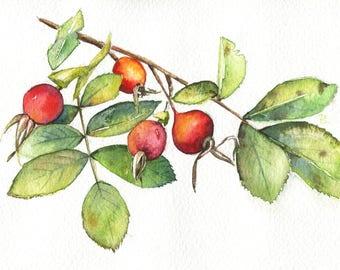 Rose hip - ORIGINAL PAINTING botanical still life nature watercolor