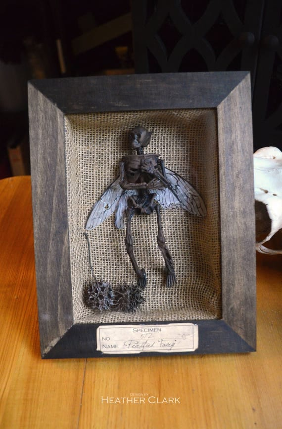 Petrified Fairy Shadow Box Display