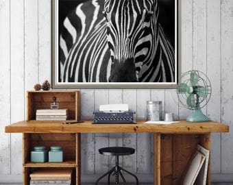Large Wall Art Zebra on Black Background Canvas Print
