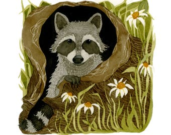 The North American Raccoon