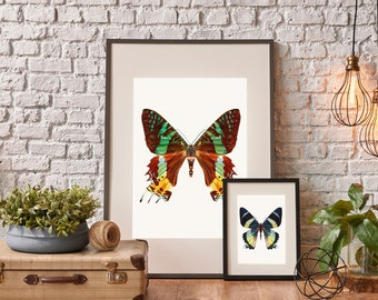 Butterfly Brown Wall Art Print, Butterfly Print, Butterfly, Wall Art Print, Wall Art, Tropical Print, Wall Decor, Print, Fine Art Print