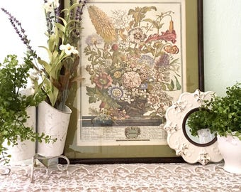Robert Furber 12 Months of Flowers Framed Vintage Botanical Prints