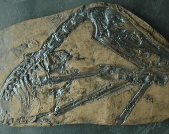 Scaphognathus crassirostris Dino Fossil Replica in Museum Quality. Animal fossils, replica, fossil imprint gift skeleton