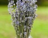 Dried Lavender (English) Bundles