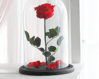 Beauty and the beast rose, Enchanted Rose, Rose in glass dome, Forever rose, Rose in Glass, preserved rose, Forever red rose, Belle rose