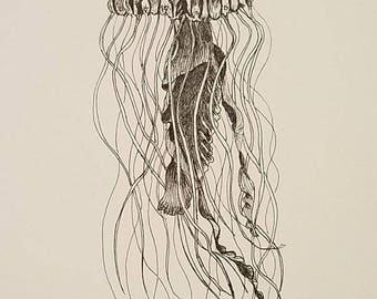 "Jellyfish-Original 5 x 7"" Ink drawing"