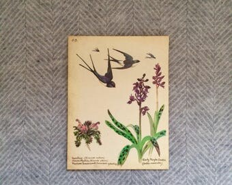 Genuine vintage framed botanical drawing, flower illustrations, print, floral, glass frame, double sided birds butterflies