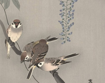 "Japanese Art Print ""Sparrows and Wisteria"" by Ohara Koson, woodblock print reproduction, fine art, asian art, cultural art, blossoms"