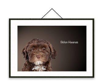 Bichon Havanais - Dog breed poster, wall sticker, nursery decor, dog print, nursery print, shabby print | Tropparoba - 100% made in Italy