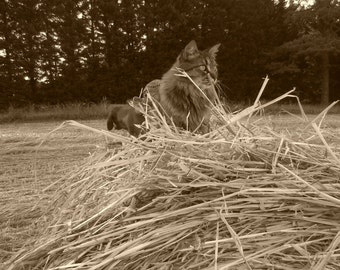 Hay Kitty