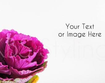 Purple Khale Flower /Stock Photo/ Styled Photo Background/ Social Media