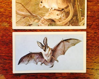 cigarette cards, British cigarette cards, Grandee British Mammal cards, 30 British Mammal cards