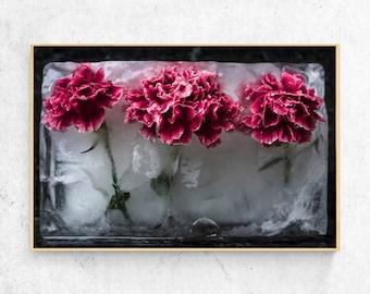 Pink Frozen Flowers print, carnation, download