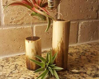 Small Air Plant Garden Wood Finish