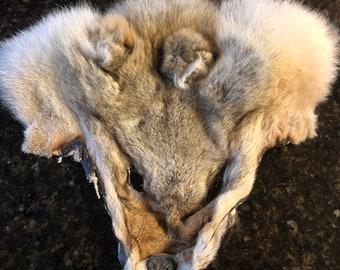 Coyote pelt mask