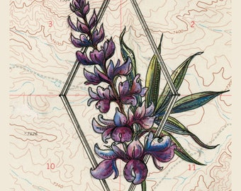Lupine Wildflower Print, purple Lupin alpine flower painting print, Mountain illustration, prairie flower vintage topography map art