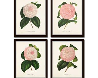 French Camellia Print Set No. 12, Botanical Print Set, Botanical Art, Botanical Prints, Camellia, Giclee, Wall Art, Botanical Illustration