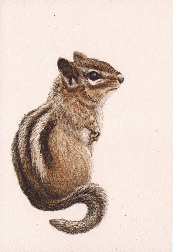 "Chipmunk  - Print of Original Art 5"" x 7"" watercolor and ink Giclee archival"