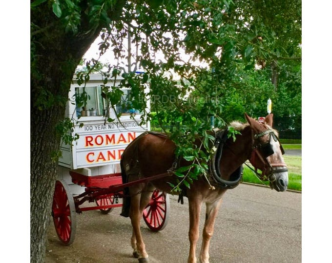 New Orleans Roman Candy Cart Photo