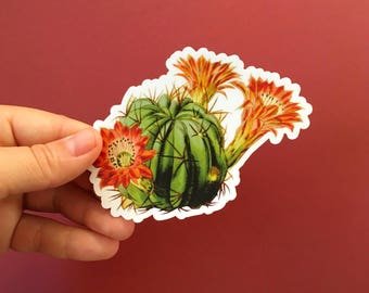 Flowering Cactus Sticker | Red Flower Vintage Vinyl Sticker | Succulent Sticker | Cactus Vinyl Decal | Plant Lover Sticker Laptop Sticker