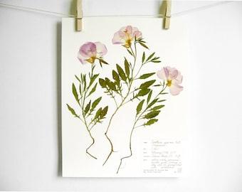 Evening Primrose Print, #233, farmhouse art pressed flower print nursery art botanical print pressed botanical art purple wildflower art