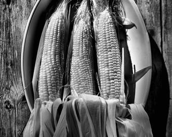 Corn on the cob captured in Black and White