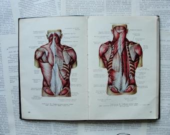 Atlas of Human Anatomy (In Russian) - 100 Plates - Hardcover - Vintage Soviet Book, 1963. Medicine Skeleton Muscles Viscera Heart Print