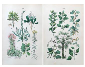 1883 Original Botanical prints set of 2, Botanical Lithograph, Botanical art, Botanical Illustration, Flower print, Old botanical prints set