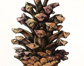 Pine cone fine art archival print, watercolor charcoal drawing, home decor, gicleé print, Illustration