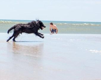 Beach Beast