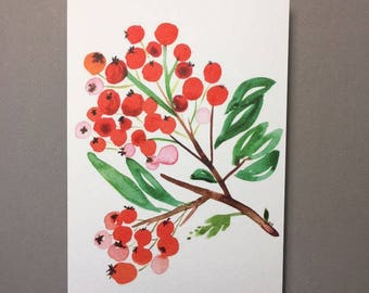 Postcard illustrated with berries