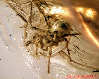 Baltic Amber Inclusion 3584 Nice SPIDER + FLY In One Amber! Genuine Natural Amber 100% Guarantee. Fossil Insect. Rare !