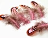 Lot de 10 plumes naturelles de faisan teintées rose, 4 à 9 cm