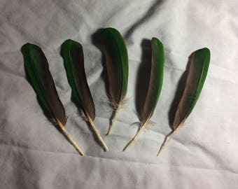 Green Noble mini macaw wing feathers