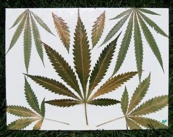 Decaying Cannabis Leaf Art