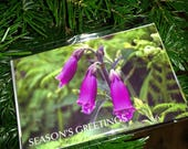 Foxglove Seasons Greeting...