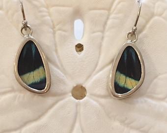 PROLA BEAUTY Butterfly Wing Earrings// Butterfly Wing Jewelry// AUTHENTIC Butterfly Wings// Eco Friendly Jewelry// Statement Jewelry