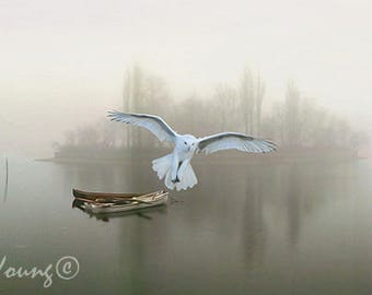 Snowy Owl Flying, Misty Morning Lake, Nature Art Print, Bird Wall Art, Row Boat on Lake, Old Dock, Water Reflections, Fine Art Photography